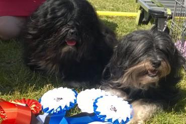 Pärnu dog show weekend July 3rd – 5th 2015